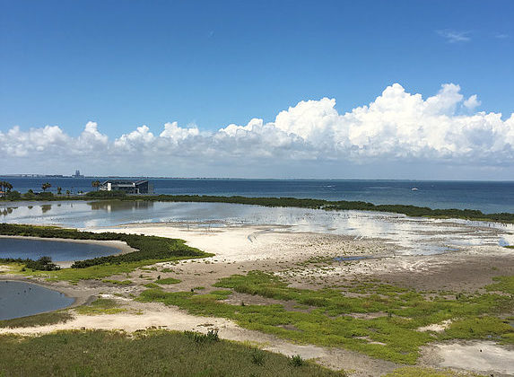 Birding the Tides | South Padre Island Birding and Nature Center