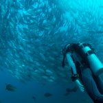 Scuba Diving on South Padre Island