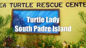 #IlaLoetscher, the  #TurtleLady of  #SouthPadreIsland, is the  #founder of Sea …